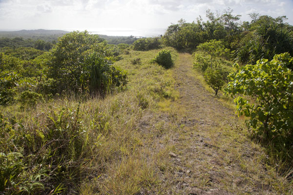 Foto de Upper part of the Tamilyog Trail - Estados Federados de Micronesia - Oceania
