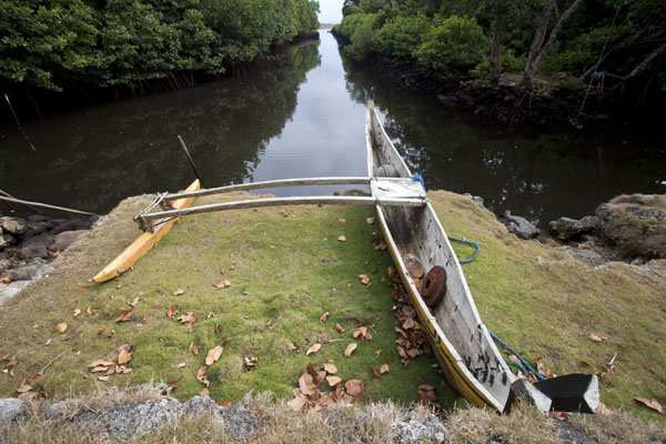 Traditional canoe docked just above the water and the mangrove coastline | Tamil village | Federated States of Micronesia