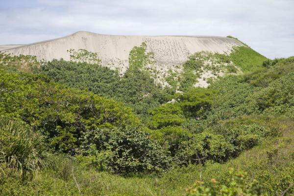 Tallest sand dune surrounded by vegetation | Dunas de arena de Sigatoka | Fiyi