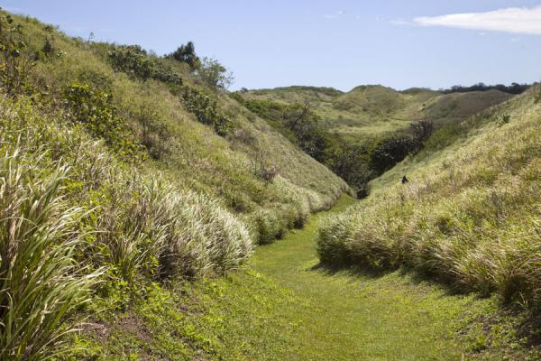 Grassy gully covering the sandy ground | Sigatoka sand dunes | 飞济