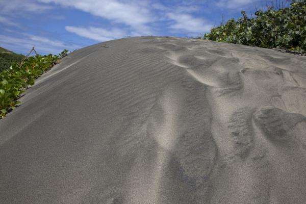 的照片 Top of a sand dune covered in vegetation - 飞济