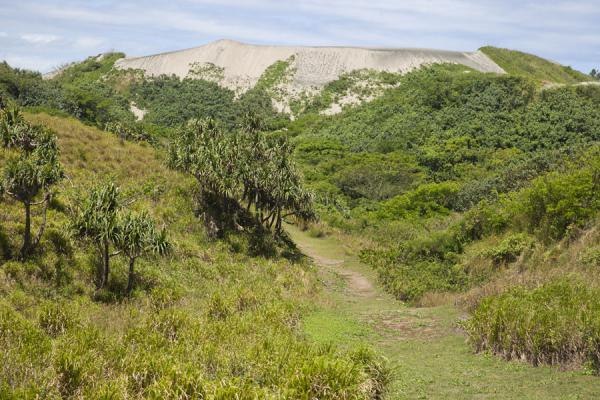 Picture of Sigatoka sand dunes (Fiji): Trees and bushes with the tallest sand dune in a distance