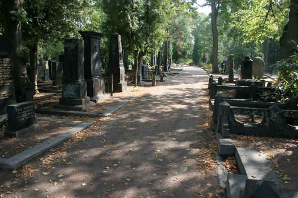 Picture of One of the principal streets of Hietaniemi CemeteryHelsinki - Finland
