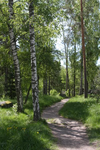 Picture of Seurasaari island: path leading through the forest - Finland - Europe