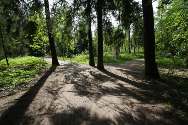 Foto di Trees casting their shadow over Seurasaari island - Finlandia - Europa