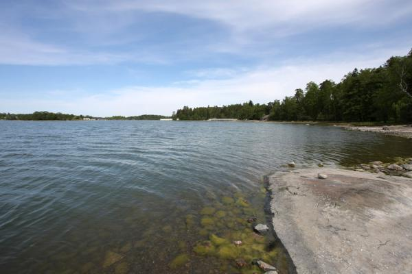 Rocks, algae and trees at Seurasaari island | 赫尔辛基 | 芬兰