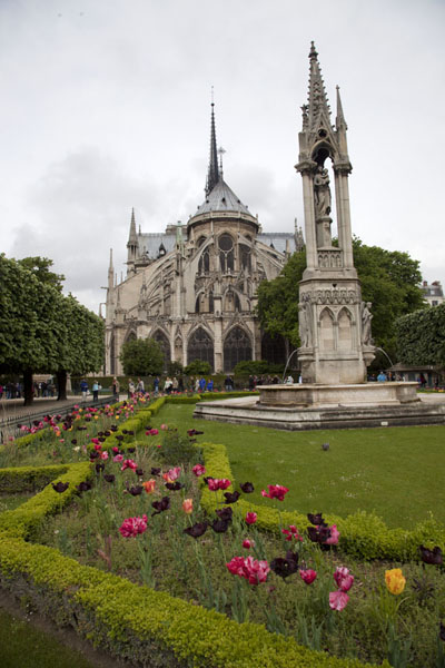 Small garden with tulips with the eastern side of the Notre Dame cathedral | Notre Dame de Paris | France