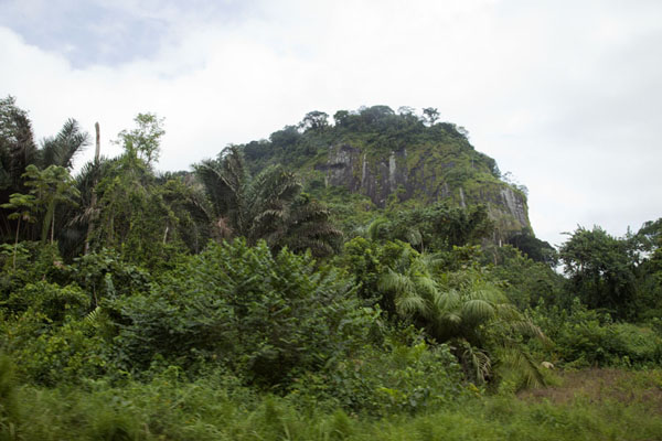 Tropical trees and mountain on the road to Libreville | Bitam to Libreville | 加彭
