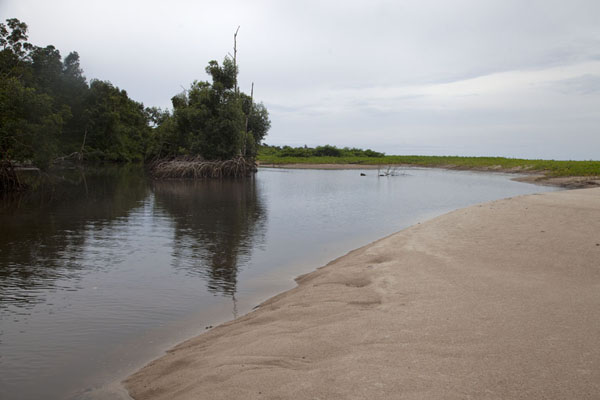 Picture of Mangrove swamp and beach at Cap Esterias
