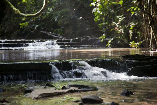 Cascades in a stream we crossed in the tropical forest | Kessala elephant hike | Gabon