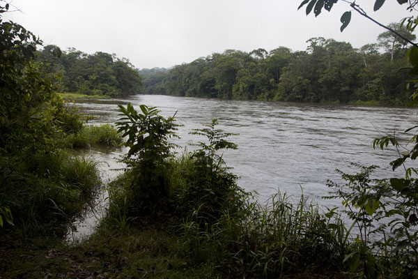 The river from which, just seconds after I took this picture, our elephant appeared | Kessala elephant hike | Gabon