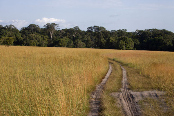 Track through a savannah in Nyonié | Nyonié Wonga Wongué Reserve | Gabon