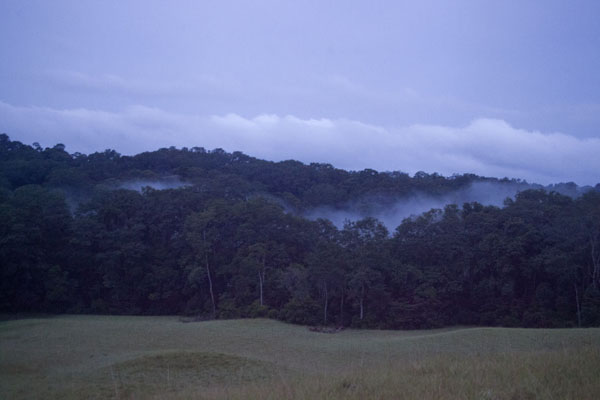 Foto van Clouds emanating from the tropical forest around sunsetNyonié - Gabon