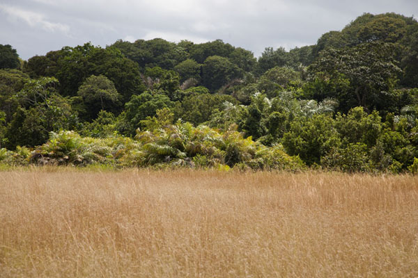 Foto van Lush green vegetation and the yellow high grass of the savannahNyonié - Gabon
