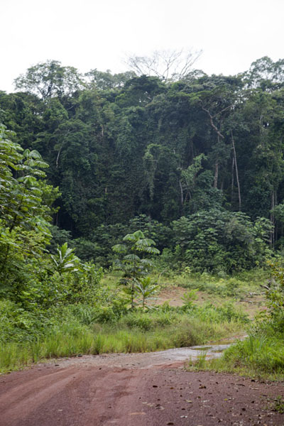 Foto di The road between Franceville and PoubaraFranceville - Gabon