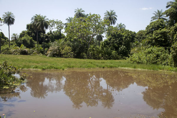 Pool surrounded by trees - but no crocodiles to be seen | Abuko Nature Reserve | Gambia