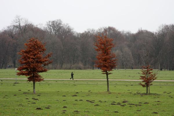 Photo de Trees and wanderer in Englischer GartenMunich - l'Allemagne
