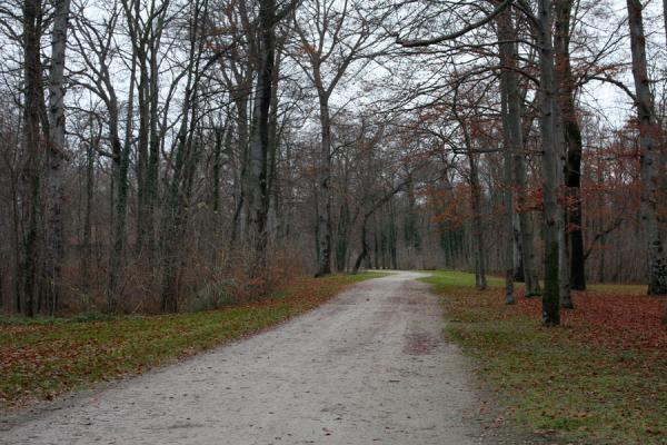 Foto di One of the many paths in the Englischer Garten - Germania - Europa