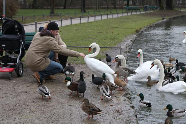 People feeding the birds in Kleinhesseloher See | Englischer Garten | Germania
