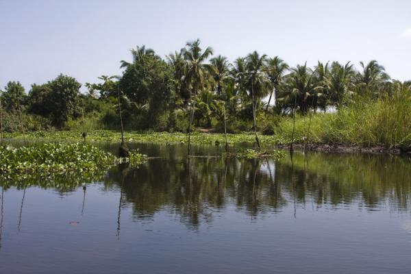 Trees reflected in a waterway of the Volta river delta near Ada Foah | Ada Foah | Ghana
