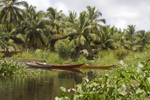 Foto van Launches and palm trees are a typical sight in the Volta river delta - Ghana - Afrika
