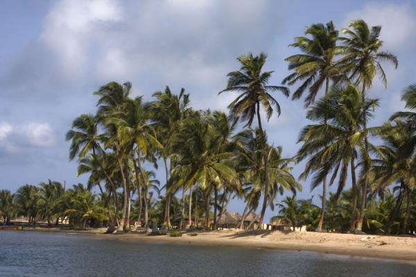 Picture of Palm trees towering above a beach on the Volta riverAda Foah - Ghana