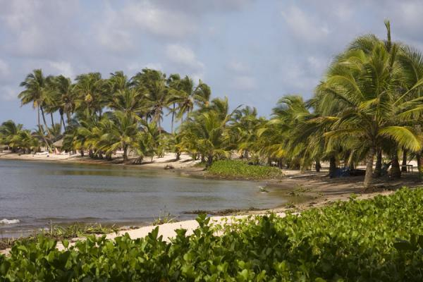 Picture of Palm trees and Volta river near the point where the river meets the seaAda Foah - Ghana