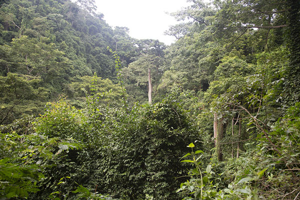 Foto van The dense forest on the hike to Kulugu fallsAvatime - Ghana