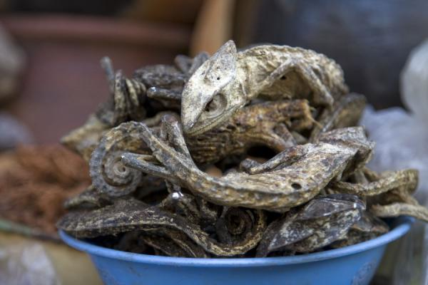 Dried chameleons in a market stall | Timber market | Ghana
