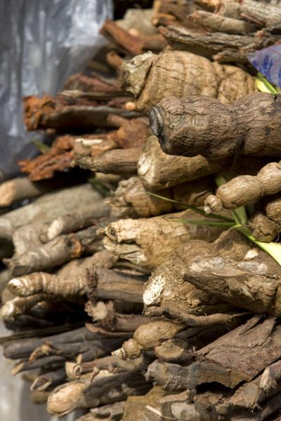 Roots that can be used for medicinal purposes | Timber market | Ghana