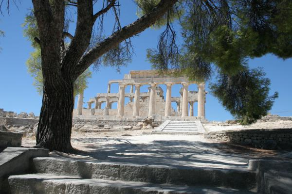 Looking at Aphaia temple through one of the trees | Aphaia Temple | Greece