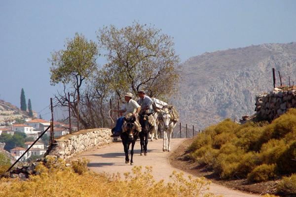 Apart from walking, the only way to go around the island is by donkey | Hydra | Griekenland