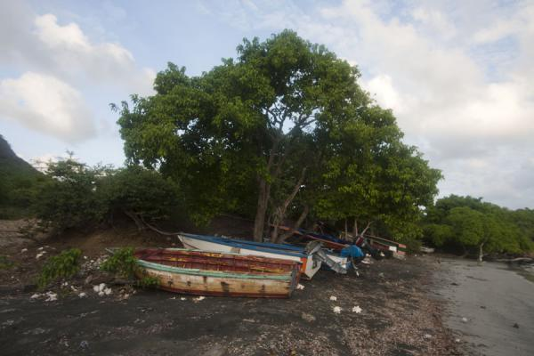 Picture of Beach in Cassada Bay in the south of Carriacou with boats under a tree