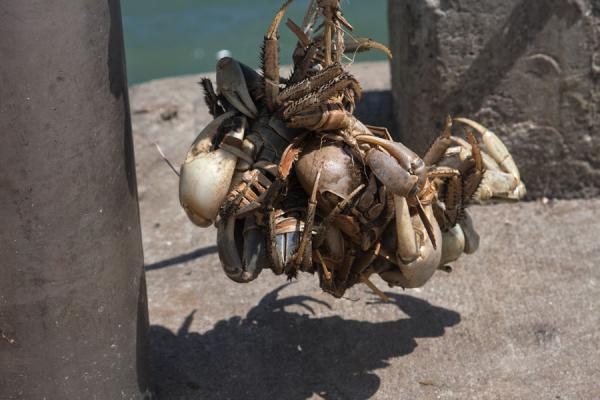 Picture of Grenville (Grenada): Crabs for sale on a pier in Grenville