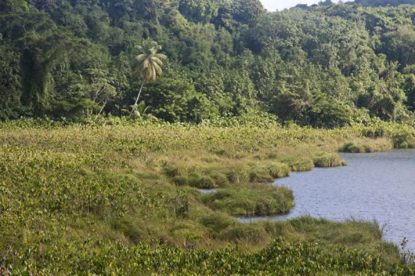 The lakeshore and surrounding forest of Lake Antoine | Lake Antoine | Grenada
