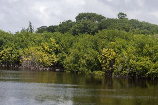 Photo de Mangrove swamp and Levera Pond just south of Levera BeachPlage de Levera - Grenade