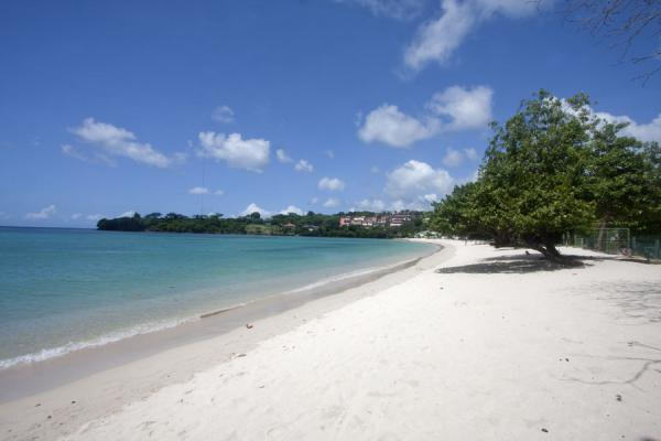 Photo de White beach of Morne Rouge with treePlage Morne Rouge - Grenade