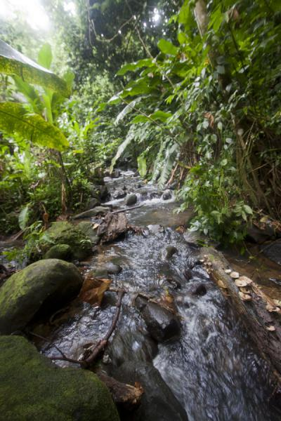 Foto di River running down from Honeymoon FallsCascata Siete Sorelle - Grenada