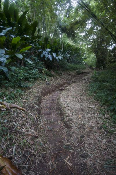 Picture of The easy part of the trail to the waterfalls