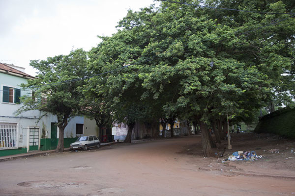 Tree-lined street next to the fortress in Bissau Velho | Bissau Velho | Guinée-Bissau