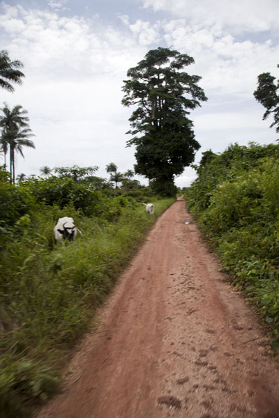 Foto di The road running north-south on Bubaque island - Guinea-Bissau - Africa