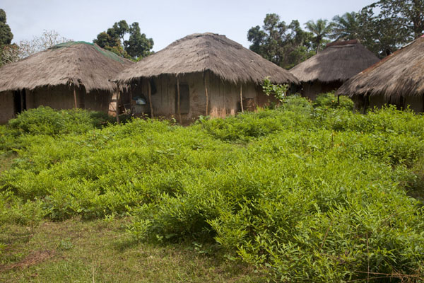 Photo de Typical straw huts on Bubaque island - Guinée-Bissau - Afrique