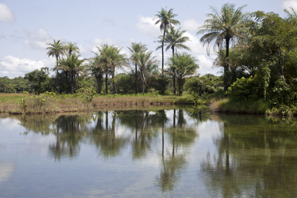 Foto de Palm trees reflected in a small lakeVarela - Guinea-Bissáu