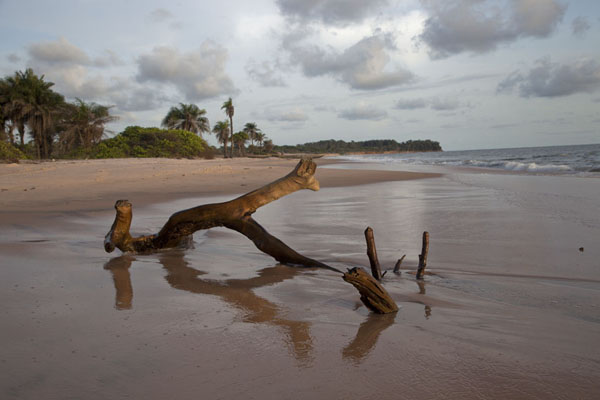 Foto van Part of a tree on the beach of VarelaVarela - Guinée-Bissau