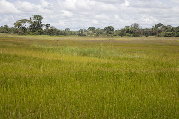 Foto di The open fields before VarelaVarela - Guinea-Bissau