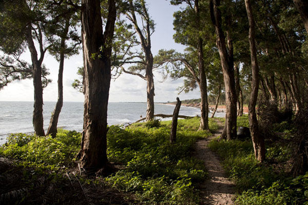 Foto di View of the beach through the pine treesVarela - Guinea-Bissau