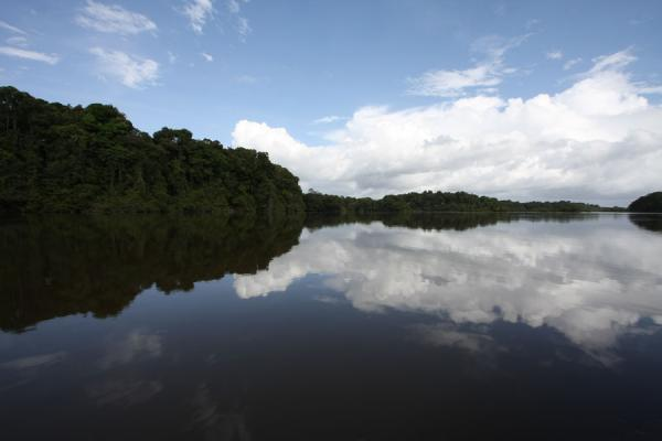 Foto van Reflections of trees and clouds in the Essequibo riverIwokrama - Guyana