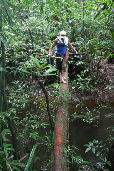 Crossing a creek over a slippery tree trunk in the pouring rain | Kaieteur overland | Guyana