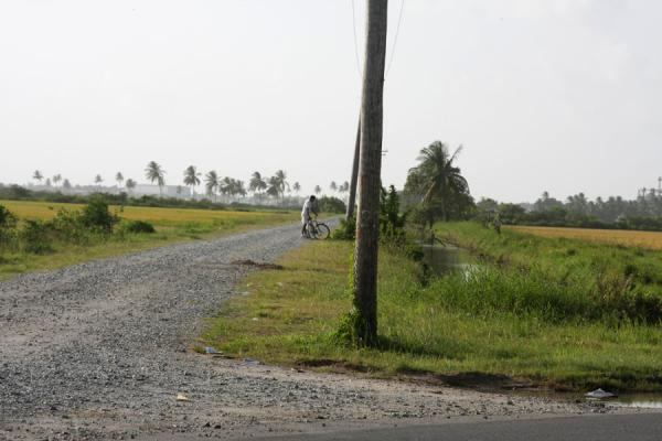 Picture of West Demerara landscape (Guyana): Road, canal and cyclist in West Demerara