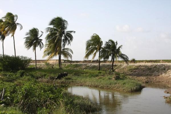Picture of West Demerara landscape (Guyana): Seawall and palm trees in West Demerara